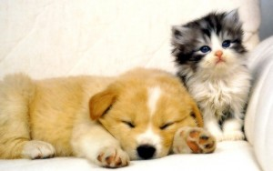 24614__cute-dog-and-sweet-kitten_p